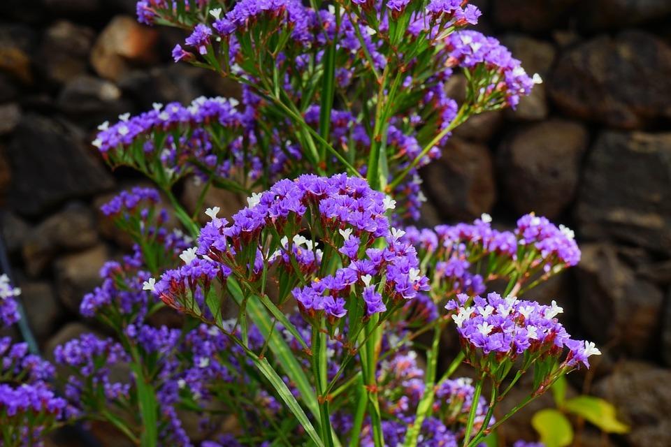 Száraz árnyalatú egynyári növények
