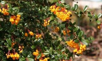 darwin borbolya